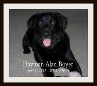 Hayman Alan Boyer