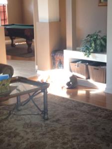 Smokey taking a sun nap